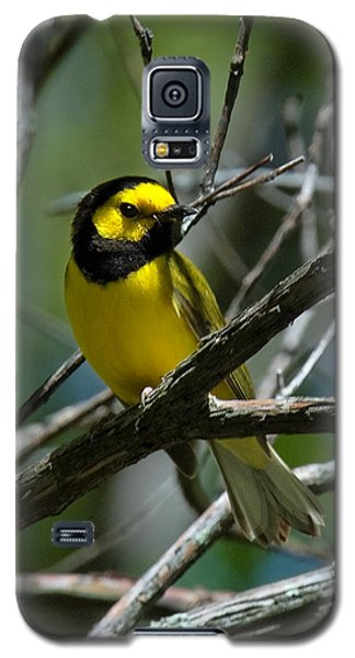 Galaxy S5 Case featuring the photograph Hooded Warbler Dsb166  by Gerry Gantt
