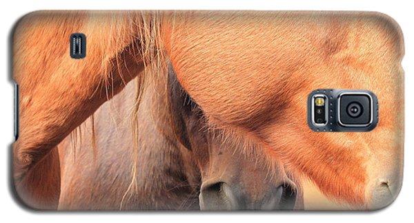 Horse Hide 2 Galaxy S5 Case by Jim Sauchyn