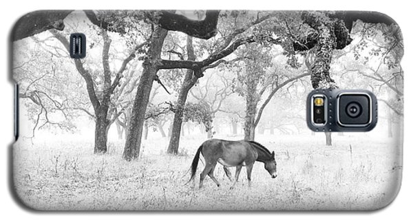 Galaxy S5 Case featuring the photograph Horse In Foggy Field Of Oaks by CML Brown