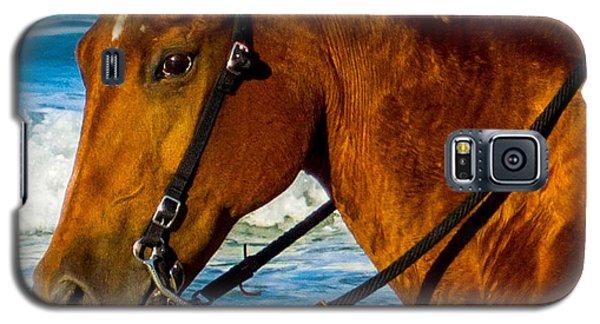 Horse Portrait  Galaxy S5 Case