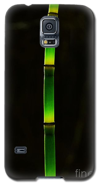Horsetail  Galaxy S5 Case