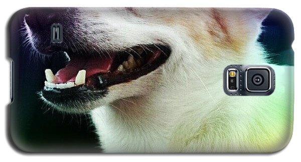 Colorful Galaxy S5 Case - Hot Dog ! #dog #tounge #pet #cute by Mandy Shupp