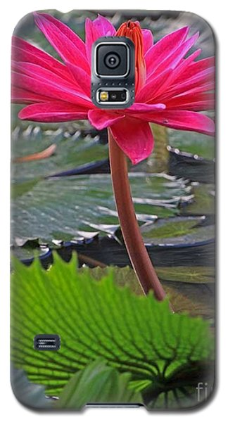 Galaxy S5 Case featuring the photograph Hot Pink Waterlily by Larry Nieland