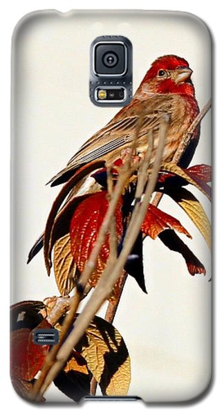 Galaxy S5 Case featuring the photograph House Finch Perch by Elizabeth Winter