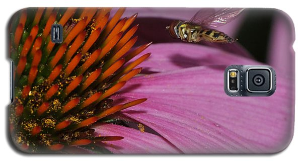 Hoverfly Hovering Over Cornflower Galaxy S5 Case