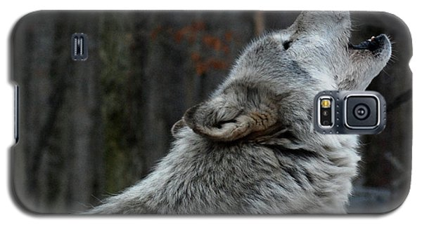 Howling Tundra Wolf Galaxy S5 Case by Richard Bryce and Family