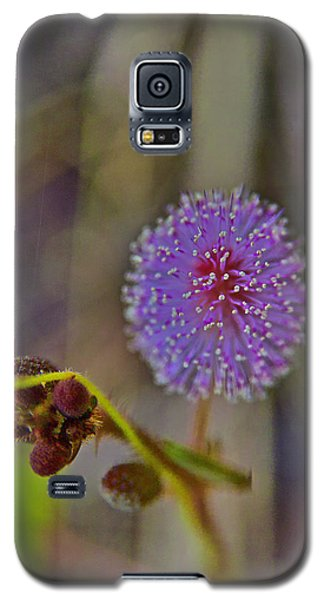 Humble Weed 1 Galaxy S5 Case