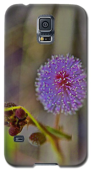 Humble Weed 1 Galaxy S5 Case by Jocelyn Kahawai
