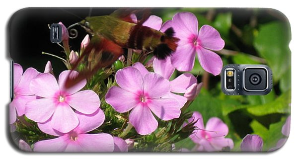 Galaxy S5 Case featuring the photograph Hummingbird Moth  by Nancy Patterson