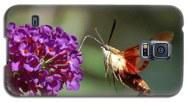 Hummingbird Moth Galaxy S5 Case