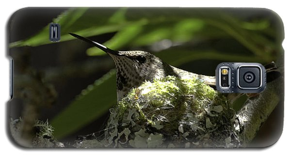 Galaxy S5 Case featuring the photograph Hummingbird On Nest by Betty Depee