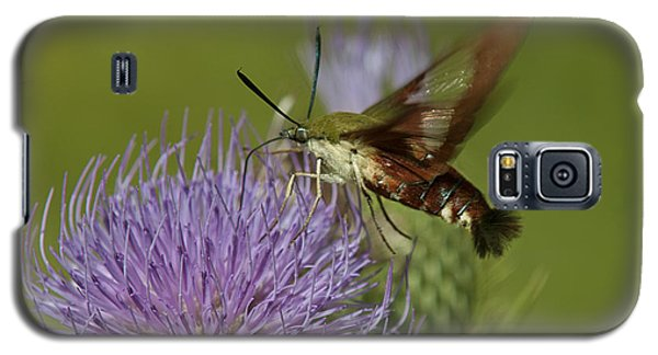 Hummingbird Or Clearwing Moth Din178 Galaxy S5 Case