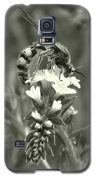 Hunter Wasp On Heliotrope Galaxy S5 Case