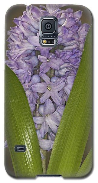 Hyacinth In Full Bloom Galaxy S5 Case