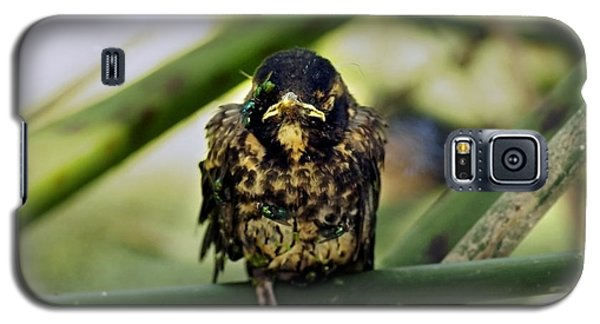 I Hate My Life - American Robin Galaxy S5 Case