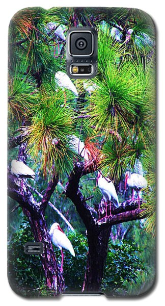 Ibis-gone To Roost-2 Galaxy S5 Case by Joy Braverman