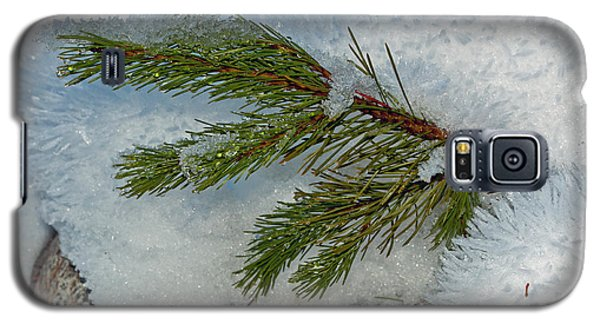 Galaxy S5 Case featuring the photograph Ice Crystals And Pine Needles by Tikvah's Hope