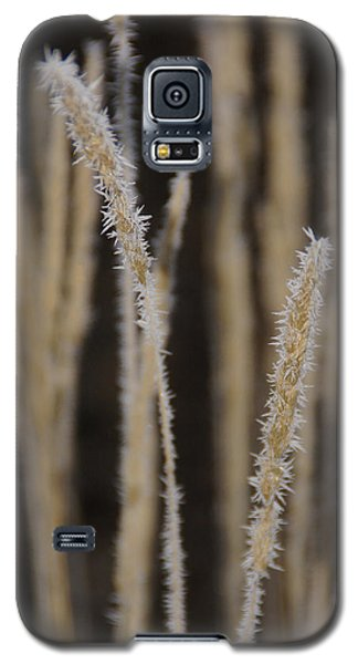 Galaxy S5 Case featuring the photograph Ice Crystals On Tall Grass by Mick Anderson