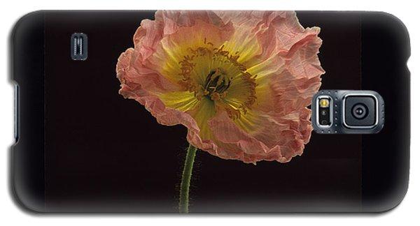 Iceland Poppy 3 Galaxy S5 Case