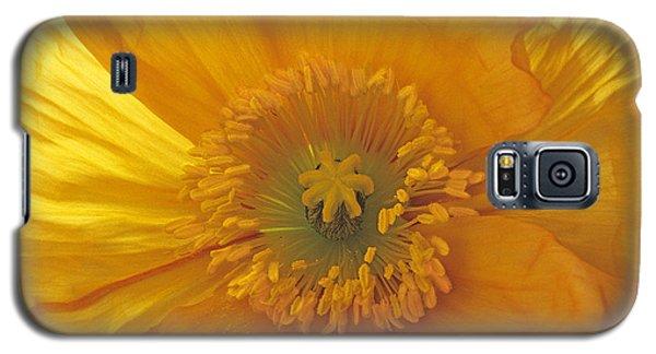 Iceland Poppy 4 Galaxy S5 Case