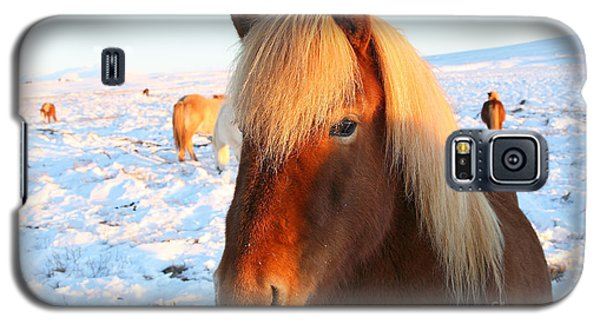 Galaxy S5 Case featuring the photograph Icelandic Horse by Milena Boeva