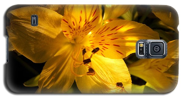 Illuminated Yellow Alstromeria Photograph Galaxy S5 Case