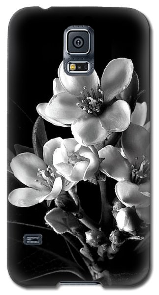 Indian Hawthorn In Black And White Galaxy S5 Case