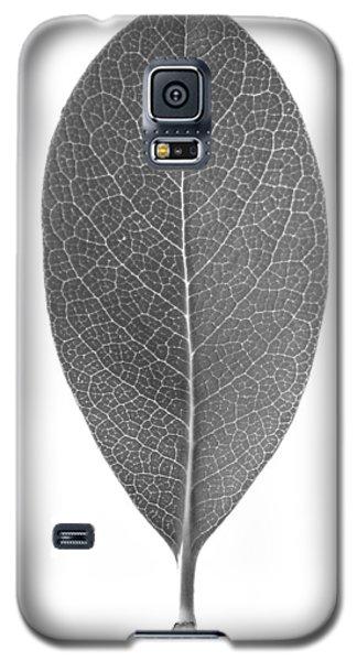 Indian Hawthorn Leaf Galaxy S5 Case
