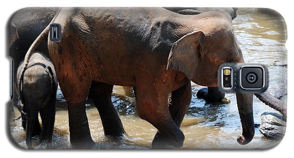 Galaxy S5 Case featuring the photograph Injured Elephant  by Pravine Chester