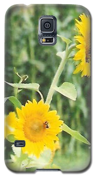 Insect On Sunflowers Galaxy S5 Case