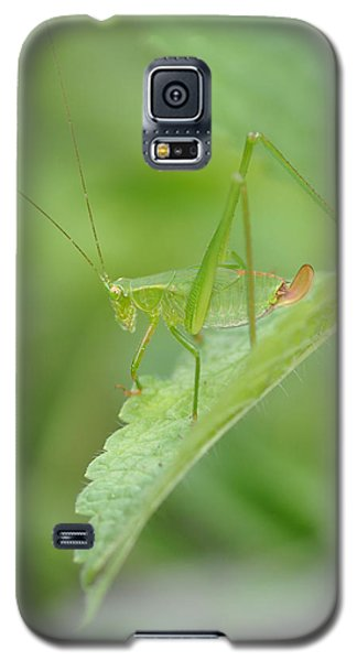 Iridescent Green Beauty On Lemon Balm Galaxy S5 Case