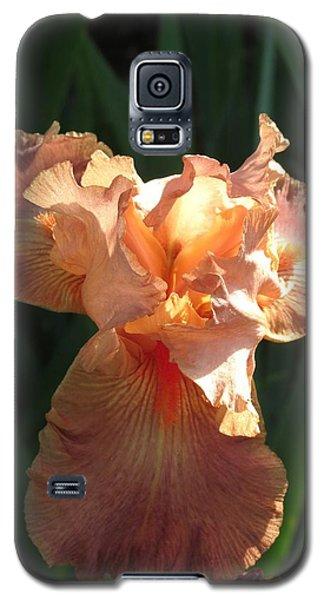 Iris Peach Galaxy S5 Case by Rebecca Overton