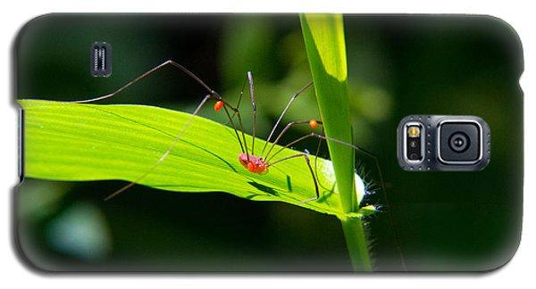 Itsy Bitsy Spider Galaxy S5 Case
