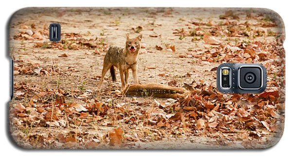 Galaxy S5 Case featuring the photograph Jackal Standing Over Deer Kill by Fotosas Photography