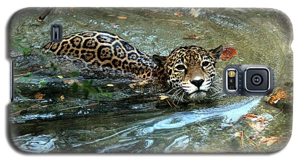 Galaxy S5 Case featuring the photograph Jaguar In For A Swim by Kathy  White