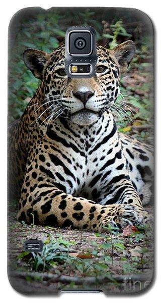 Galaxy S5 Case featuring the photograph Jaguar Portrait by Kathy  White