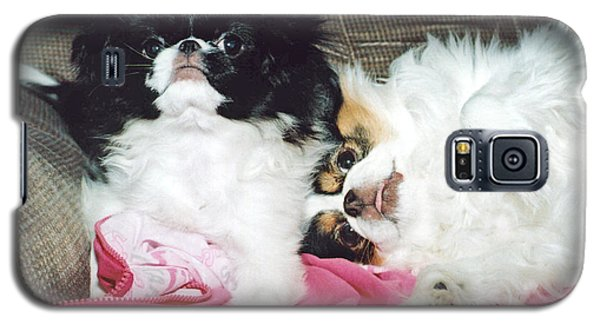 Galaxy S5 Case featuring the photograph Japanese Chin Dogs Begging For Treats by Jim Fitzpatrick
