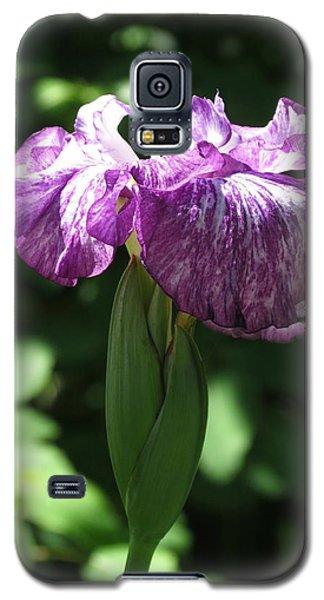 Japanese Iris Galaxy S5 Case by Rebecca Overton