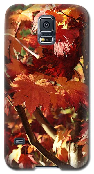 Galaxy S5 Case featuring the photograph Japanese Maple 1 by Tanya  Searcy