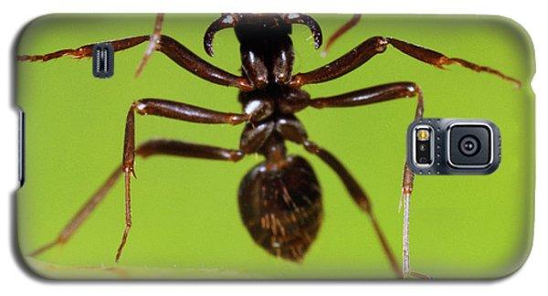 Japanese Slave-making Ant Polyergus Galaxy S5 Case by Satoshi Kuribayashi