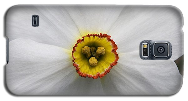 Galaxy S5 Case featuring the photograph Jonquil by Michael Friedman