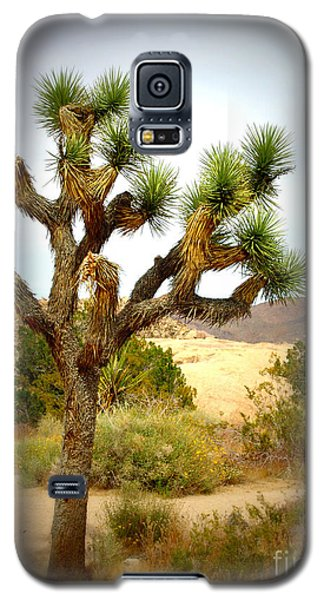 Galaxy S5 Case featuring the photograph Joshua Tree by Jim McCain