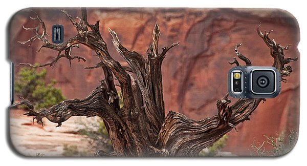 Galaxy S5 Case featuring the photograph Juniper At Canyonlands by Bob and Nancy Kendrick