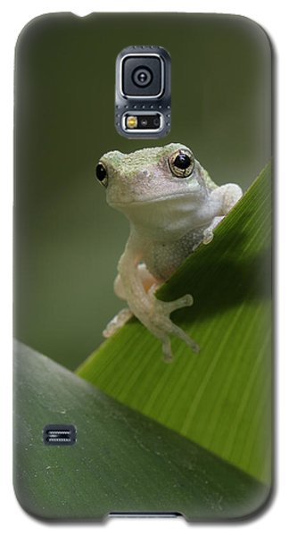 Galaxy S5 Case featuring the photograph Juvenile Grey Treefrog by Daniel Reed