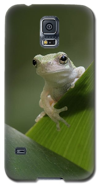 Juvenile Grey Treefrog Galaxy S5 Case