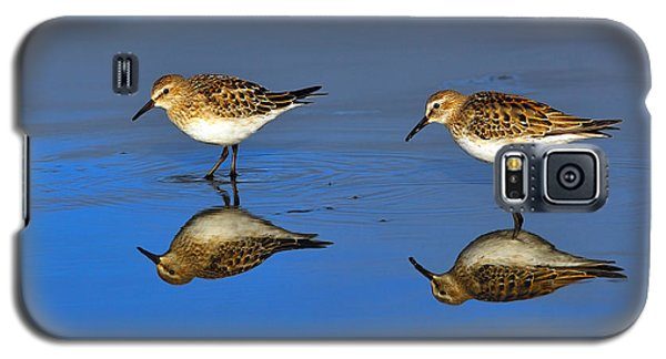 Juvenile White-rumped Sandpipers Galaxy S5 Case