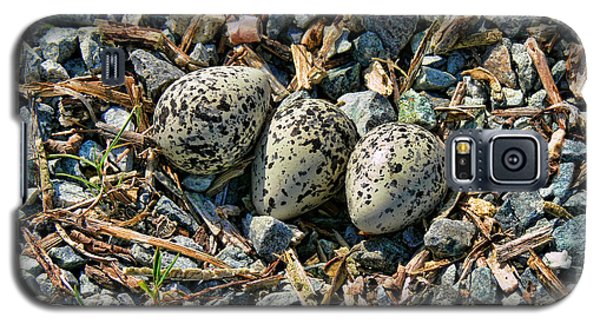 Killdeer Bird Eggs Galaxy S5 Case by Jennie Marie Schell