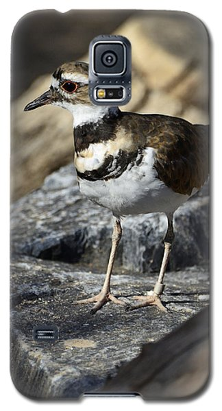Killdeer Galaxy S5 Case by Saija  Lehtonen