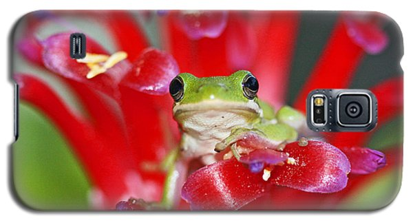 Galaxy S5 Case featuring the photograph Kiss A Prince Frog by Luana K Perez