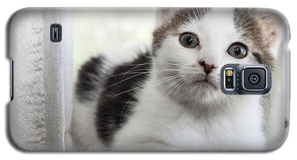 Kitten In The Window Galaxy S5 Case by Jeannette Hunt